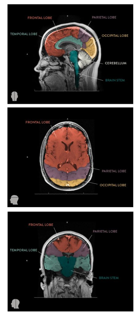 anatomysmall