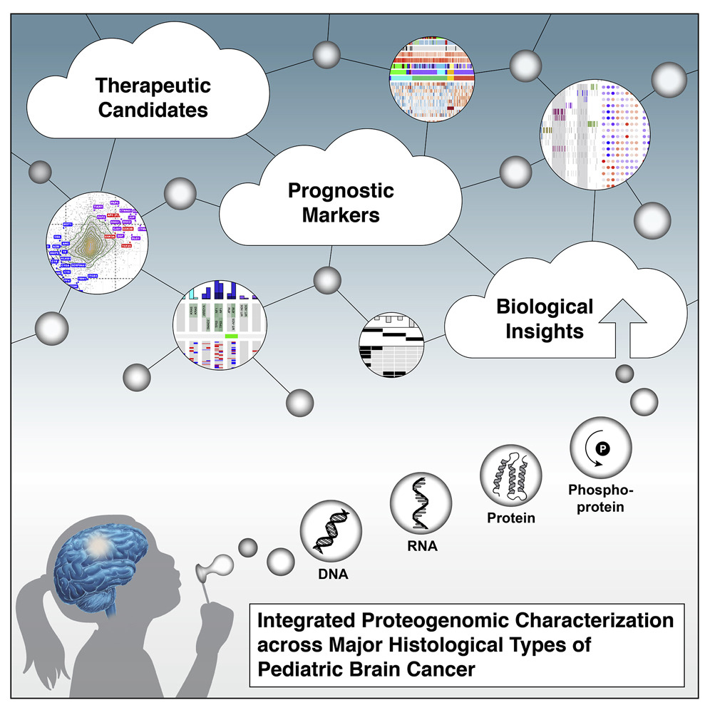 Diagram of How Tumor Understanding Leads to Biological Insights and Treatments